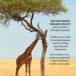 Brochure containing image of Giraffe standing under a single tree with information about the up coming research project in August 2018